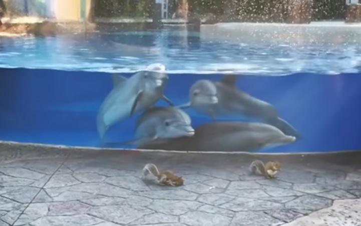 イルカとリス